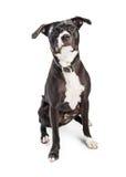 Cute Medium-Sized Mixed Breed Dog Stock Photo