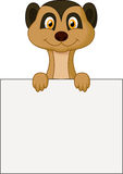 Cute meerkat cartoon holding blank sign Stock Photography