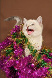 Really cute meow christmas kitten. With blue eyes Stock Photography