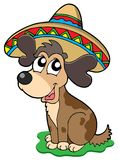 Cute Mexican dog Stock Image