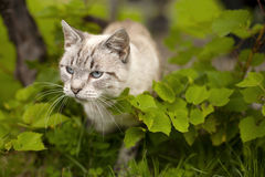 Cute mixed breed cat Royalty Free Stock Photo