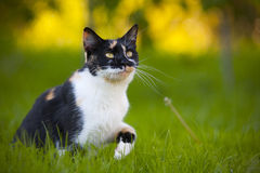 Cute mixed breed cat Royalty Free Stock Images