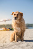 Cute mixed breed dog on beach Stock Image