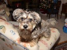 Cute mixed breed dog. Stock Photography