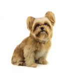 Cute Mixed Breed Dog Stock Photography