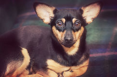 Cute mixed breed dog Royalty Free Stock Photography