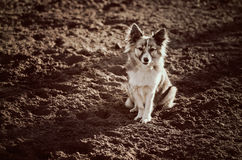 Cute mixed breed dog Royalty Free Stock Images