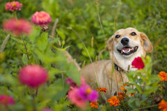 Cute mixed breed dog Royalty Free Stock Photos
