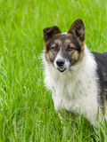 Cute mixed breed dog Stock Image