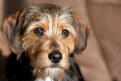 Cute Mixed Breed Pup Stock Image