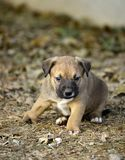 Cute mixed breed puppy with deformity. On his front right leg,image of stock image