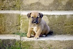 Cute mixed breed puppy with deformity. On his front right leg,image of stock images