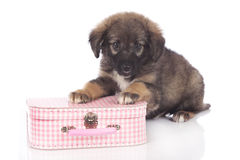 Cute mixed breed puppy on a little suitcase Stock Photo