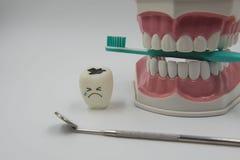 Cute modelo juega los dientes en odontología en un fondo blanco Fotos de archivo libres de regalías