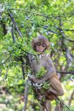 A cute, modest monkey sits on a tree branch royalty free stock image