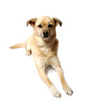 Cute mongrel dog stock images