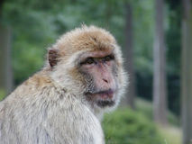 Cute monkey. Looking at you stock images