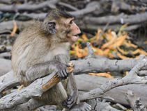 Cute monkey Royalty Free Stock Photo