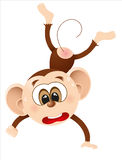 Cute monkey.  Royalty Free Stock Photos