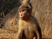 Cute monkey Royalty Free Stock Photography