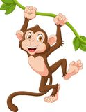 Cute monkey animal hanging on a vine Stock Photos
