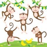 Cute monkey with banana Royalty Free Stock Photo
