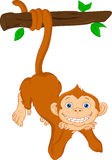 Cute monkey cartoon hanging Stock Photo