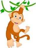 Cute monkey cartoon hanging. Illustration of cute monkey cartoon hanging Stock Photos