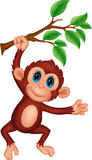 Cute monkey cartoon hanging Royalty Free Stock Photo