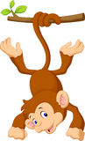 Cute monkey cartoon hanging Stock Image