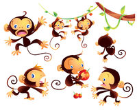 Cute monkey. Catoon many actions naughty Stock Image