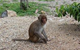 Cute monkey cub on monkey island royalty free stock photos