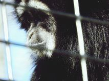 Cute Monkey Face Fotografia de Stock Royalty Free