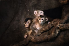 Cute monkey face Stock Photography