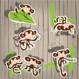 Cute monkey fun. Monkey on the wooden background with shadows Stock Photos
