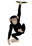 Cute monkey Stock Images