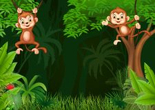 Cute monkey hangin in the jungle Royalty Free Stock Photography