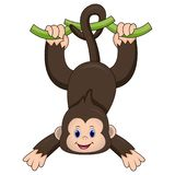 Cute monkey hanging vector illustration
