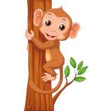 Cute monkey holding tree Royalty Free Stock Photography
