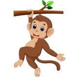 Cute monkey Stock Photo