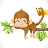 Cute monkey lazily lying on a branch and holds the tail  Royalty Free Stock Photo