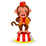 Cute monkey playing percussion hand cymbals Stock Photos