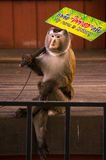 Cute monkey show in Phuket zoo Royalty Free Stock Photo