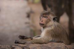 Cute monkey. Side portrait of cute monkey Stock Photo