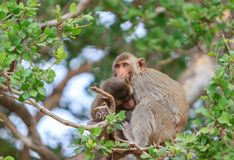 The cute monkey is sitting on the tree royalty free stock photography