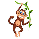 Cute monkey swinging on vines cartoon. Colourfull Royalty Free Stock Photo
