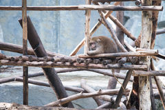 Cute monkey at Royalty Free Stock Photography