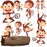 Cute monkeys in different positions Royalty Free Stock Photos