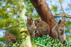 Cute Monkeys Stock Image