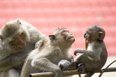 Cute monkeys Stock Photo